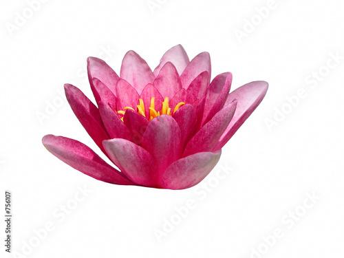 Wall Murals Water lilies lotus flower design element