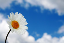 Blume Im Himmel