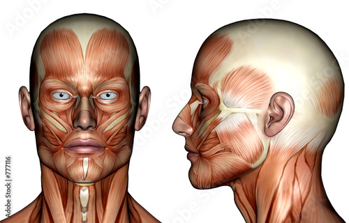 Photo illustration - face muscles