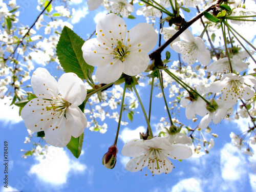 Deurstickers Lente spring flowers