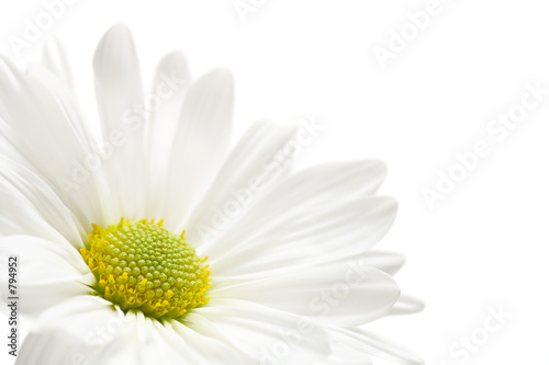 In de dag Madeliefjes daisy highkey