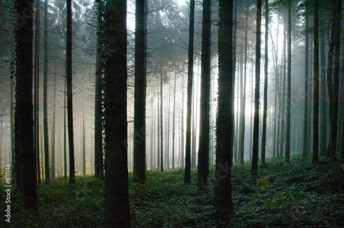 głęboki las