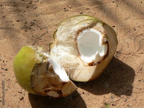Valokuva  noix de coco 1