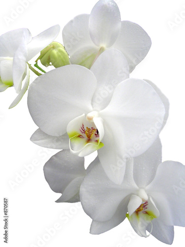 Tuinposter Orchidee orchide