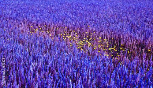 La pose en embrasure Bleu fonce blue&yellow