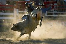 Rodeo Bull & Rider