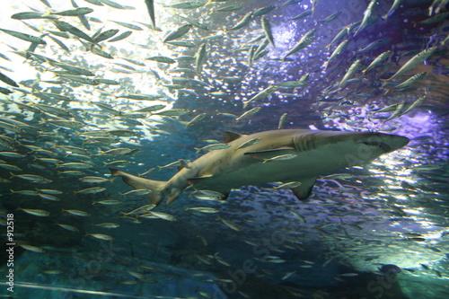 les dents de la mer Tableau sur Toile