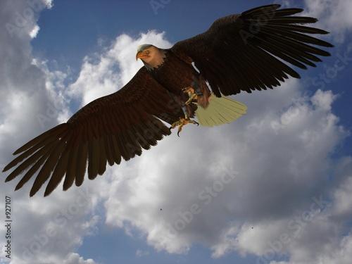 In de dag Eagle adler