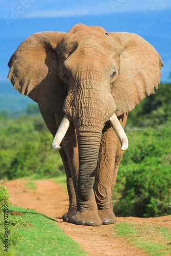 Photo  elephant portrait