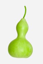 Calabash - Bottle Gourd