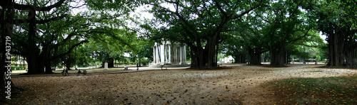 Fotografie, Obraz  jardin dans le centre de la havane