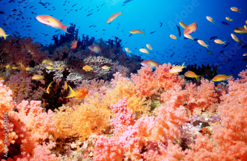 Poster Onder water soft coral reef