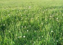Blowing Grass