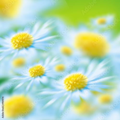 Doppelrollo mit Motiv - daisies