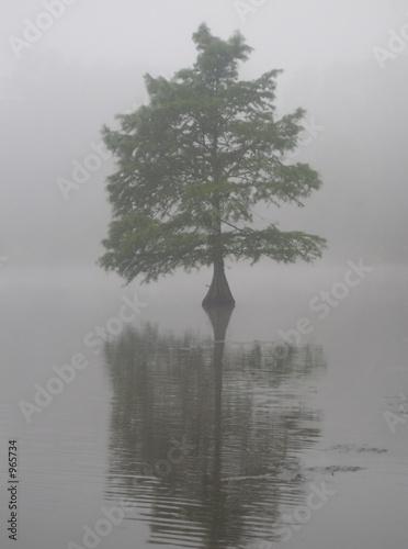Fototapety do przedpokoju   drzewo-cyprysowe-w-stawie-pulapkowym-delaware