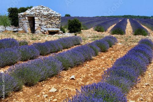 Montage in der Fensternische Lavendel champ de lavande en fleur