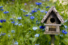 Birdhouse Among The Flowers