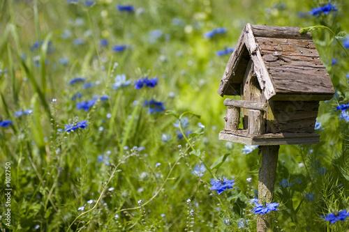 Fotografia birdhouse among the flowers