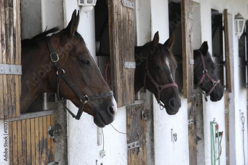 Foto op Canvas Paardrijden pferde in der box