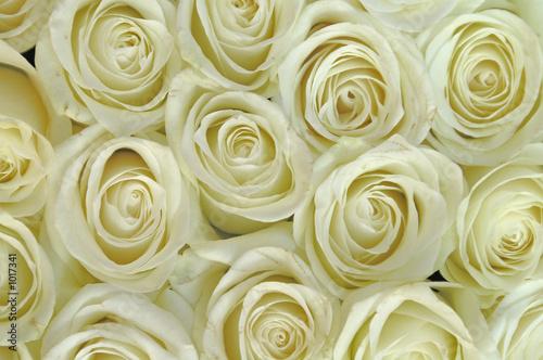 Zdjęcie XXL białe kwiaty
