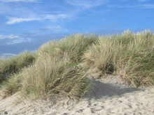 Bosquet D'oeillat Dans Les Dunes