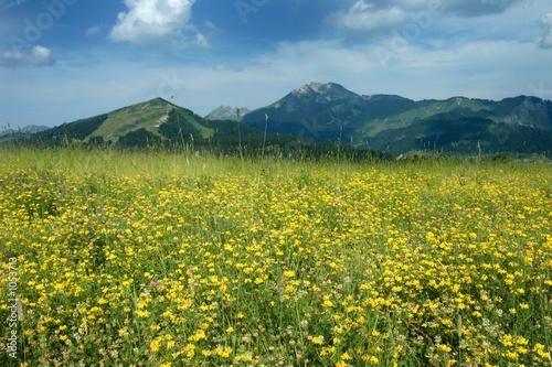 Valokuva  montagne