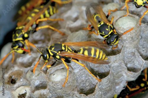 Vászonkép wasp nest