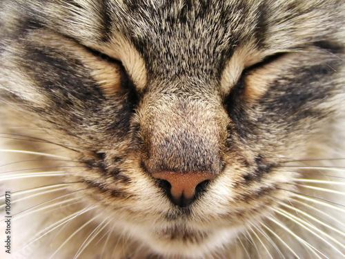 Photo  tabby cat