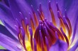 Leinwandbild Motiv waterlily