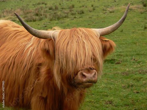 Fototapety, obrazy: highlander 3