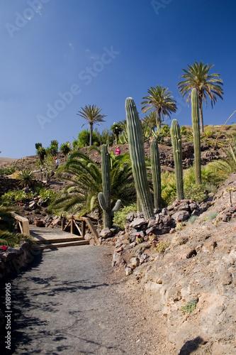 Deurstickers Canarische Eilanden cactus3