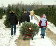 Family Cutting Christmas Tree
