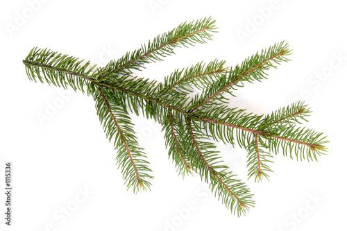 Fotografie, Obraz  isolated pine branch
