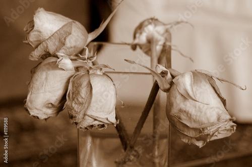 Fotografie, Obraz wilting roses