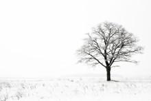 Winter Lonelyness