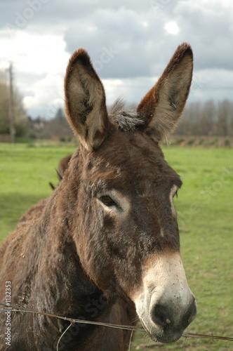Photographie Un âne