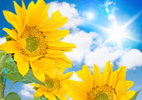 Foto-Leinwand ohne Rahmen - sonnenblumen (von Patrizia Tilly)