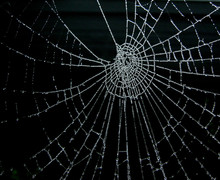 Frosty Spiderweb