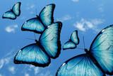 ciel et papillon