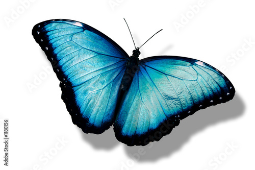 Deurstickers Vlinder papillon bleu