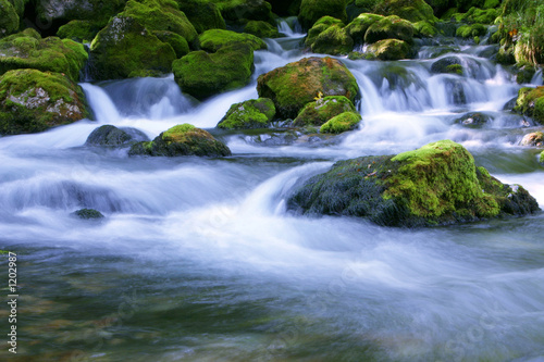 Fotografie, Obraz  forest stream