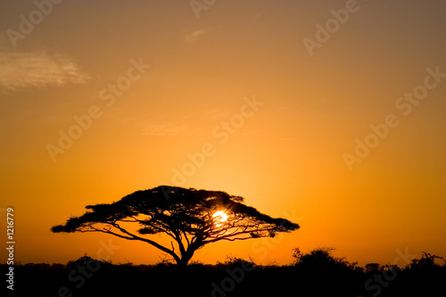 acacia tree at sunrise Wallpaper Mural