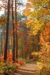 Fototapetacolors of fall