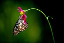 Tropical Rainforest Butterfly