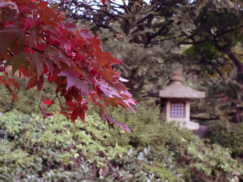 autumnal japanese park