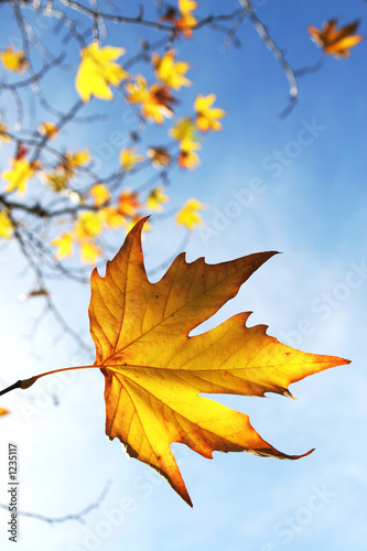 Fotorollo basic - autumn leaves (von Creative images)