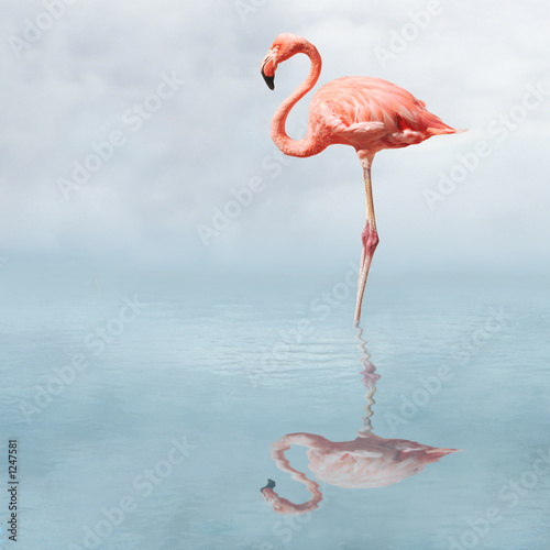 flamingo in pond