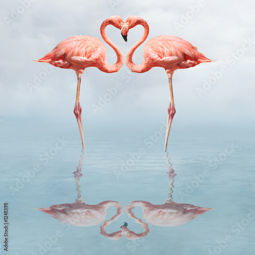 Foto op Aluminium Flamingo making love