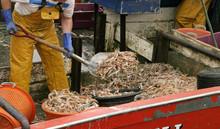 Shrimp On The Boat