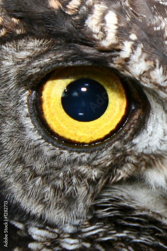yellow owl eye Wallpaper Mural
